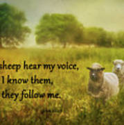 My Sheep Hear My Voice Poster