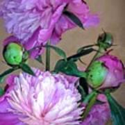 My Spring Garden Peony Poster