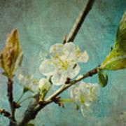 My Springtime Poster