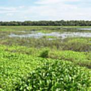 Myakka River And Marshes Poster