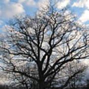Naked Oak Poster