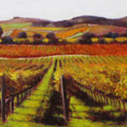 Napa Carneros Vineyard Autumn Color Poster
