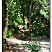 Napa Rose Pathway Poster