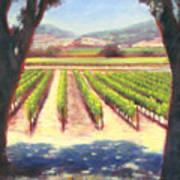 Napa Wine Vineyard Summer Poster
