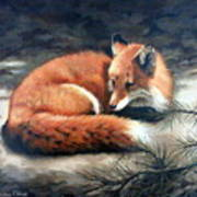 Naptime In The Pine Barrens Poster by Sandra Chase