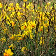 Narcissus And Grasses Poster