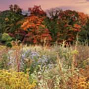 Native Garden Sunset Poster