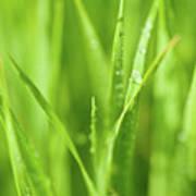 Native Prairie Grasses Poster by Steve Gadomski