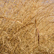 Natural Abstracts - Elaborate Shapes And Patterns In The Golden Grass Poster