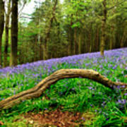 Natural Arch And Bluebells Poster