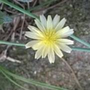 Natural... White And Yellow Flower Poster