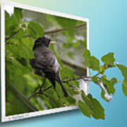 Nature Bird Poster