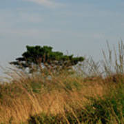 Nature Bonzai In The Evening Sun Poster