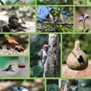 Nature Collage Poster