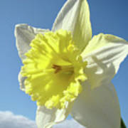 Nature Daffodil Flowers Art Prints Spring Nature Art Poster