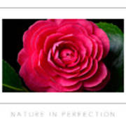 Nature In Perfection Poster Poster