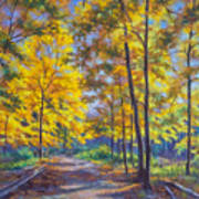 Nature Trail Turn Of Autumn Poster by Fiona Craig
