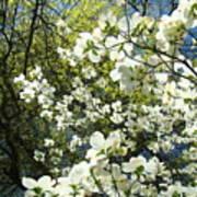 Nature Tree Landscape Art Prints White Dogwood Flowers Poster