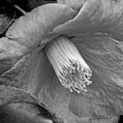 Nature's Beauty In Black And White Poster