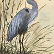 Nature's Harmony Poster