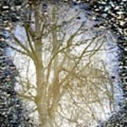 Natures Looking Glass 4 Poster