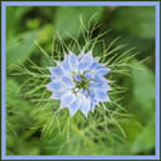 Natures Star Poster