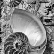 Nautilus Shell With Starfish Poster