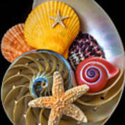 Nautilus With Sea Shells Poster