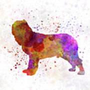 Napolitan Mastiff In Watercolor Poster