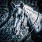 Nebraska Rodeo Roping Horse... Poster