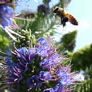 Nectar Landing Poster