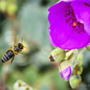 Nectar Run Poster