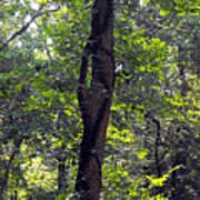 Needle Hook Tree Poster
