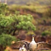 Maui Hawaii Haleakala National Park Nene Hawaiian State Bird Poster