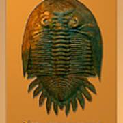 Neometacanthus Fossil Trilobite Poster