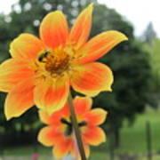 Neon Orange Flower Poster