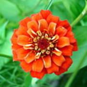 Nepal Orange 2 Poster