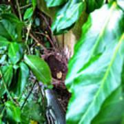 Nest In Plain Sight Poster