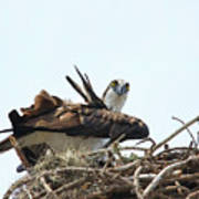 Nesting At Walmart Poster