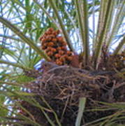 Nesting Dove Poster