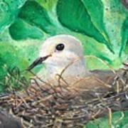 Nesting Poster
