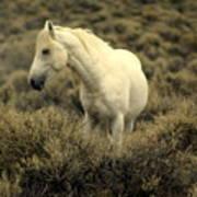 Nevada Wild Horses 4 Poster