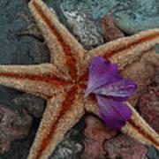 Never Forgotten- Starfish Art Poster