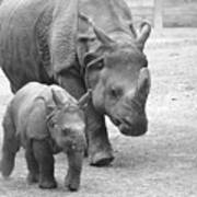 New Born Rhino And Mom Poster