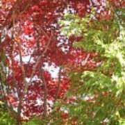 New England Autumn Globe Poster