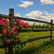 New England Vineyard Poster