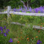 New Hampshire Wildflowers Poster