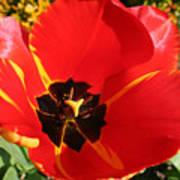 New Spring Beginnings Poster
