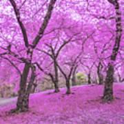 New York City Springtime Poster