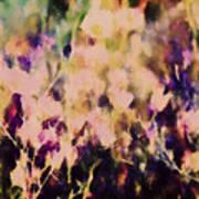 New York Wildflowers Xiii Poster